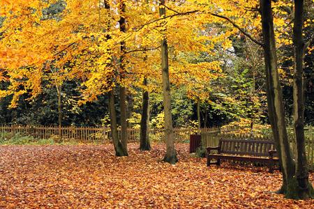 Autumn in Holland Park, London photo