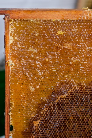 The beekeeper checking the honeycomb frame on the apiary.
