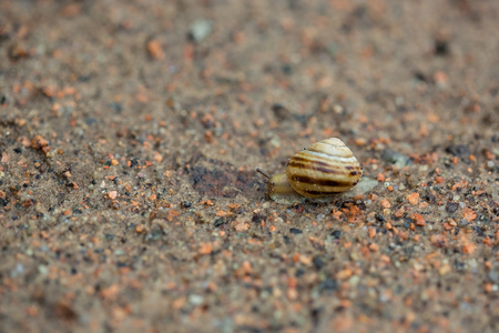 Snail on the sand, nature after the rain, dew Stock Photo