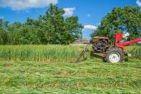 Work on an agricultural farm Stock Photo