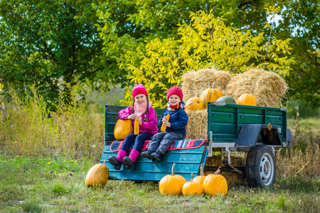 Group of little children enjoying harvest festival celebration at pumpkin patch.