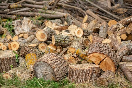 A lot of cut logs. Natural wood decor background. A pile of chopped firewood prepared for winter.