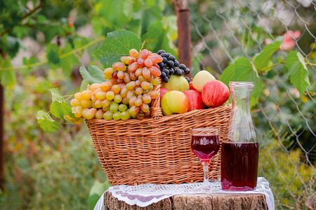 Arrangement in the garden with blue and green grapes, a basket, a glass of red drink and a bottle on the table against the background of the garden. Still life with fruit.