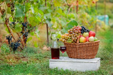 Arrangement in the garden with blue and green grapes, a basket, a glass of red drink and a bottle on the table against the background of the garden. Still life with fruit. Stockfoto - 130072884