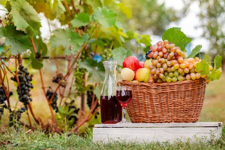 Arrangement in the garden with blue and green grapes, a basket, a glass of red drink and a bottle on the table against the background of the garden. Still life with fruit. Stockfoto - 130072892