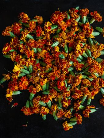 Processing of dried flowers marigolds. Dried Chernobriv inflorescences for tea and cooking oil, Tagetes flower extract, tincture, infusion.
