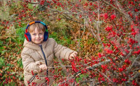 Little boy on an autumn day near the fruit tree Crataegus monogyna, known as the hawthorn or single-seeded hawthorn, May flower, major, blackthorn.