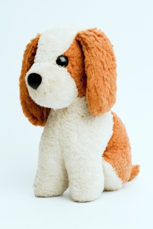 Toy Dog isolated on white background