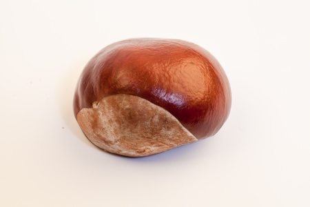 conkers: One chestnut isolated on the white Stock Photo