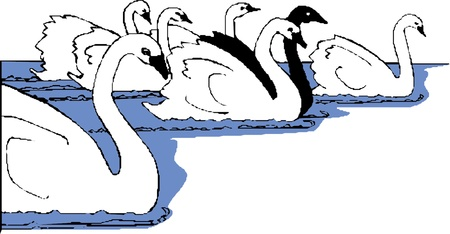 vector illustration  swans Stock Vector - 22008231