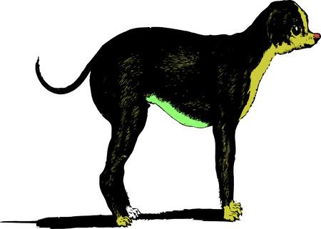 protruding: vector sketch dog
