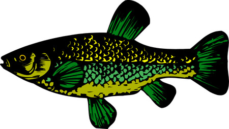 coho: Fish. Vector. Illustration