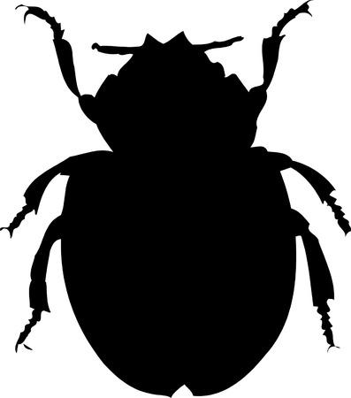 bug silhouette on white background, vector illustration
