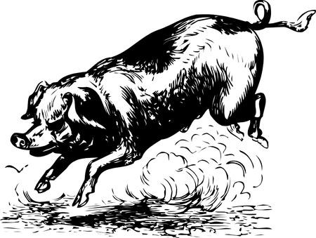 pig tails: pig
