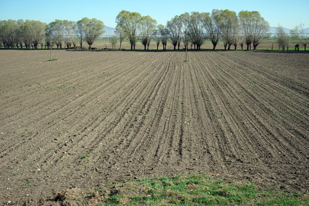 plowed: plowed field trees mountains Stock Photo
