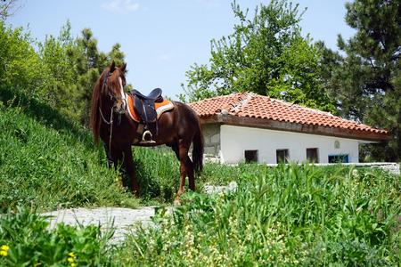 savvy: savvy handsome stallion near the building