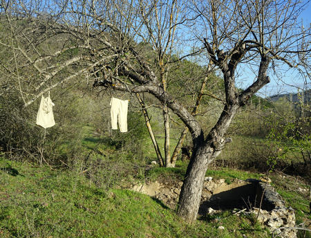 drying: underwear drying on tree