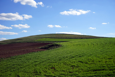 green meadows: hilly green meadows and blue sky