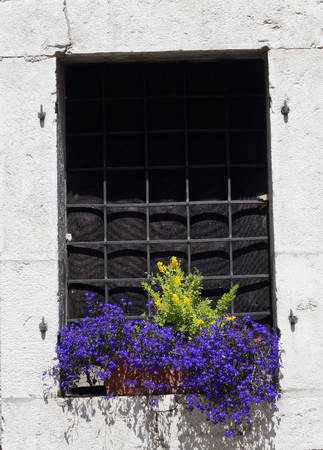 barred: barred window with flowers