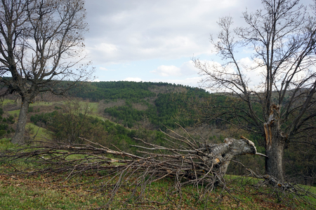 lightning strike: tree after lightning strike