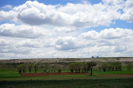 plowed: beautiful tree on the plowed earth
