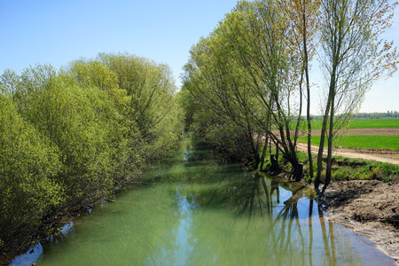 swampy: swampy canal and trees in water