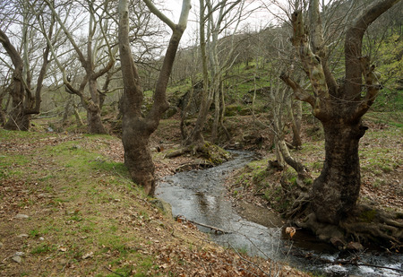 dense forest: River flowing in a dense forest Stock Photo
