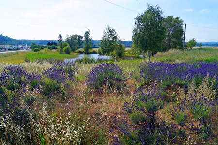 near: beautiful lake with trees and lavender bushes near the road
