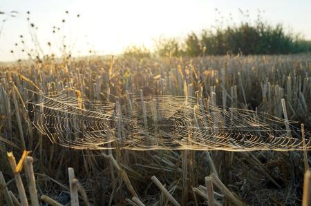 slant: Web as a hammock slant field