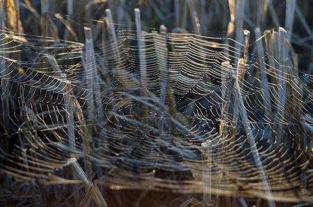 slant: Web slant Rye