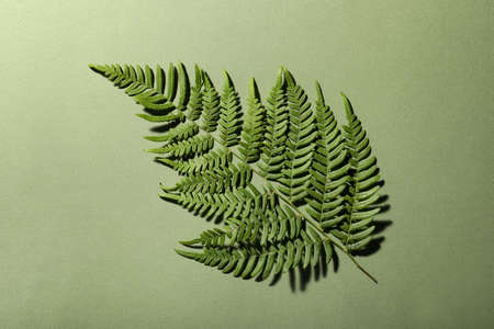 Beautiful tropical fern leaf on light green background, top view