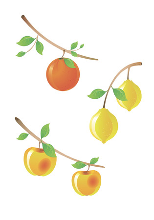 miscellaneous: Set of the miscellaneous fruit on branch tree