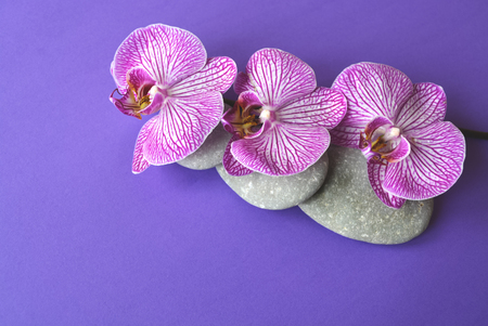Spa stones and beautiful purple orchid flowers on a topical violet background. Stock Photo