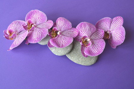 Spa stones and beautiful purple orchid flowers on a topical violet background. Imagens