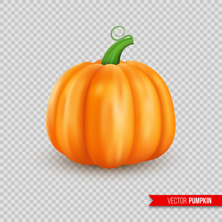 Realistic ripe pumpkin. Isolated on transparent background. Vector illustration.