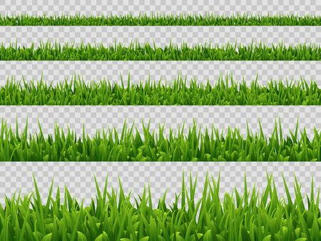 Vector green grass border collection isolated on transparent background. Realistic style. Spring or summer plant leaves.