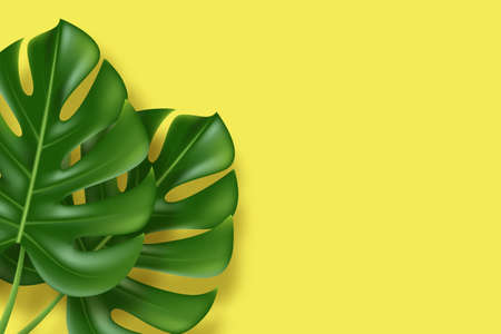 Monstera leaves on yellow background