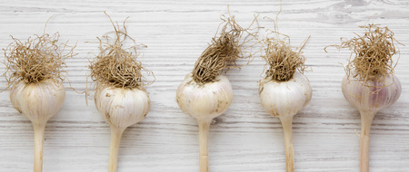 Garlic bulbs on white wooden table, overhead view. 写真素材