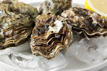 Fresh oysters on ice on a plate, side view. Close-up. Imagens