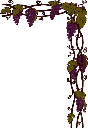 ivy hanging: grapevinen Stock Photo