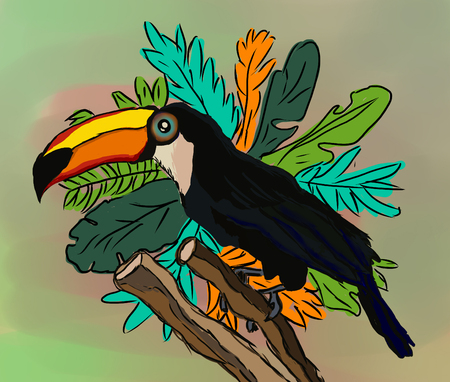 Toucan bird cartoon character. South America fauna. Wild animal illustration for zoo ad, nature concept, children book illustration