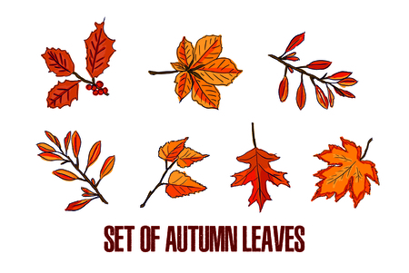 Set of different autumn leaves on a white background. Stockfoto