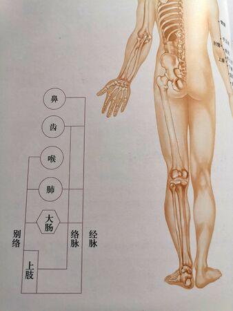 Traditional Chinese Medicine Meridian Diagram Foto de archivo