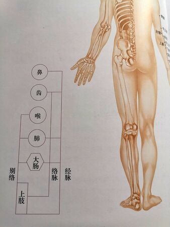 Traditional Chinese Medicine Meridian Diagram