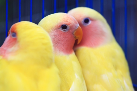 vivo: parrots in a cage of a zoo, closeup of photo Stock Photo