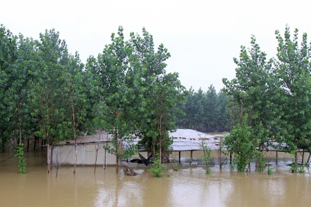 Buildings and trees in the flood on August 2, 2012, Luannan, Hebei, China.   Stock Photo - 18999250