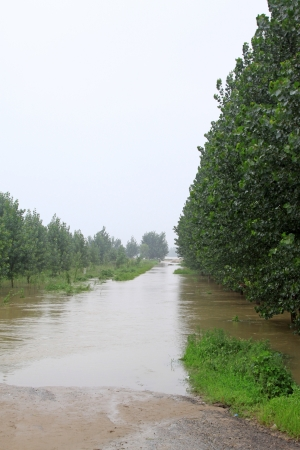 Trees in the flood on August 2, 2012, Luannan, Hebei, China.  Stock Photo - 18999231