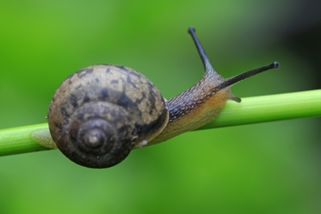 closeup of snail on green plant in the wild