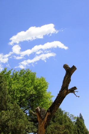 trees in the blue sky background Stock Photo - 20720188