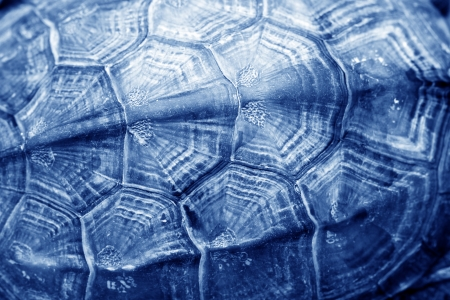 tortoise shell pattern, closeup of photo in a zoo
